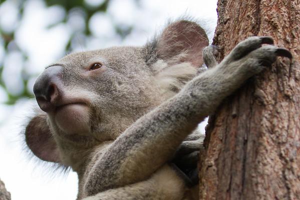 Oz Wildlife