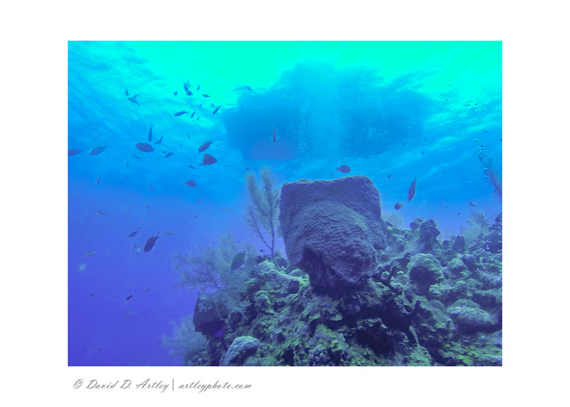Reef Scene with Dive Boat, off 7 Mile Beach, Grand Cayman Island
