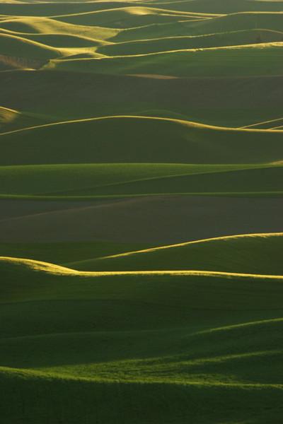 Last light on wheatfields, Washington