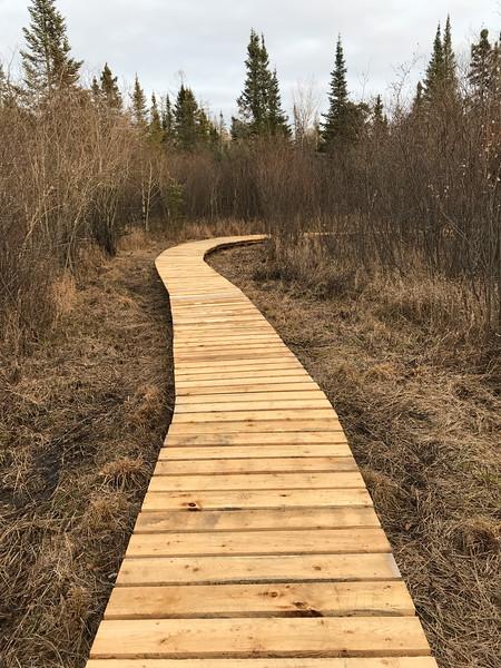 Fringed Gentian Bog Auggie's Boardwalk Fermoy Road Sax-Zim Bog MN IMG_7766.jpg