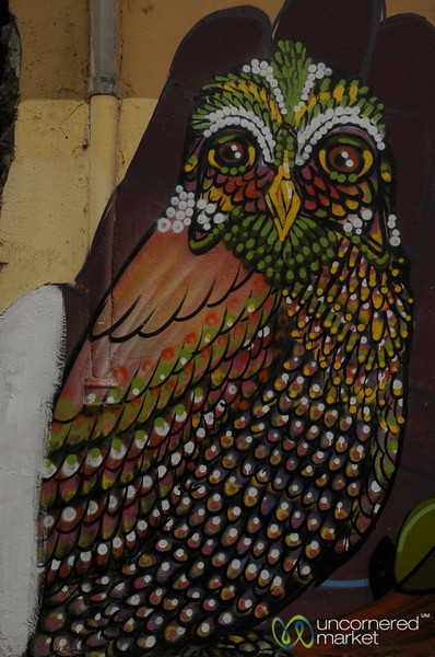 Wise Bird of Valparaiso, Chile