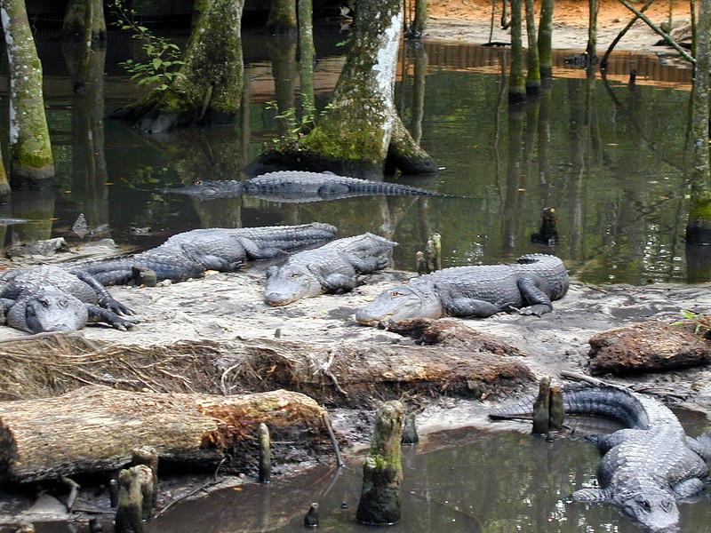 Tarpon Springs Wildlife Park (3).jpg
