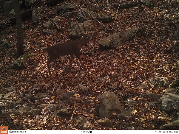 Trail Cam Photos & Video