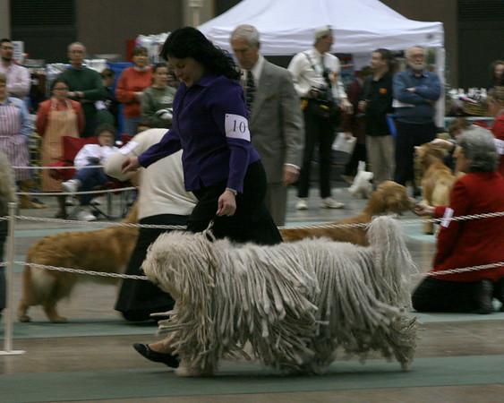 Olean Kennel Club Show - February 17, 2008