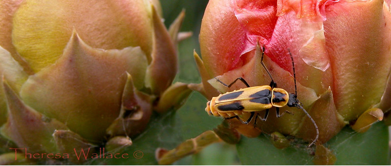 Cactus bug edited.JPG
