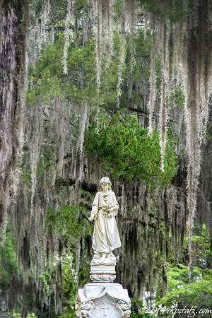 Bonaventure Cemetery Savannah, GA 2014