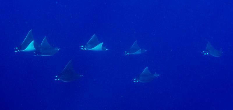 2014 Whale Shark - Cave Adventure-69.jpg
