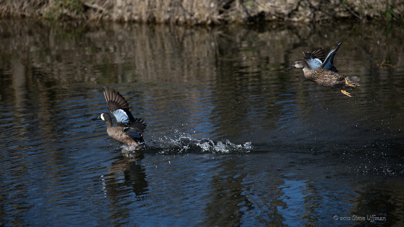 20121218-_G7Q7557Lacassine NWR-Edit-4.jpg