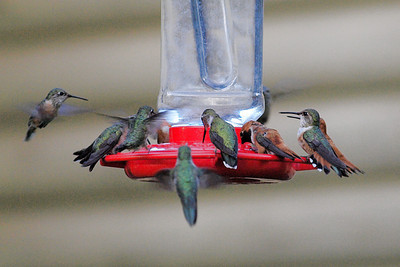 Hummers-a-humming