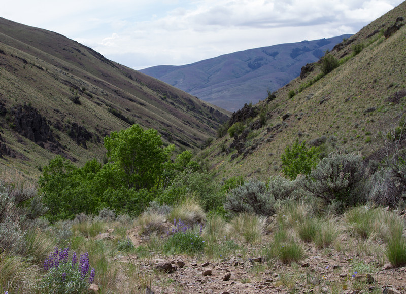 Looking down Black Canyon..
