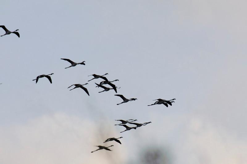 aves da ria- Aveiro  - Setembro 2010 -  1705.jpg