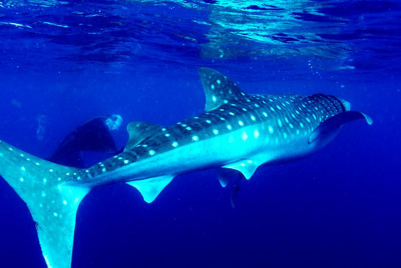 2014 Whale Shark - Cave Adventure-44.jpg