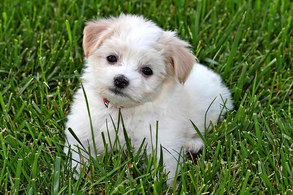Tobby Puppy
