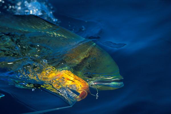Sport Fishing/ Subsistance Fishing