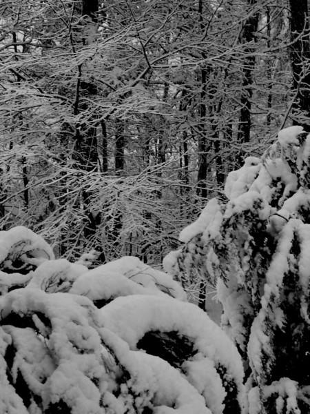 snow storm 2.jpg
