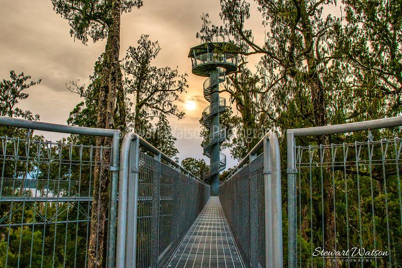 West Coast Tree Walk
