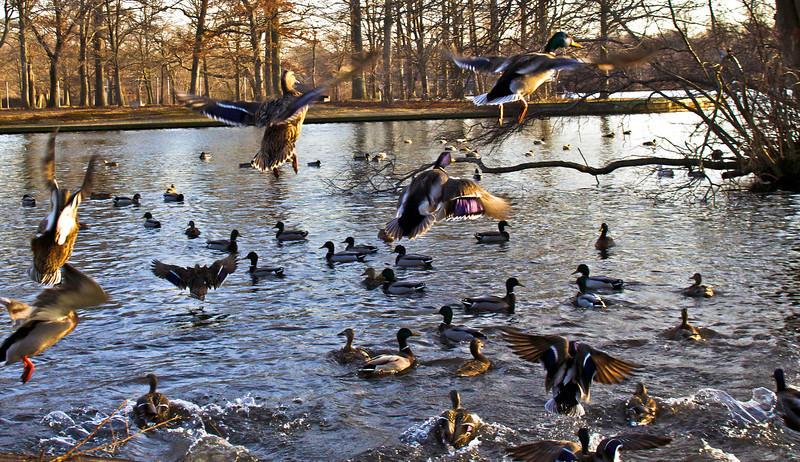 duck9.jpg
