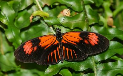 Puelicher Butterfly Vivarium