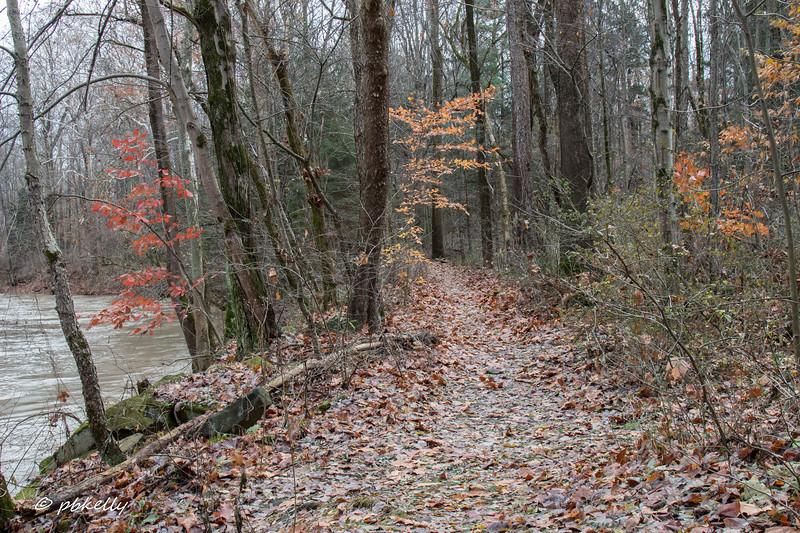 fall scene 111917-3.jpg