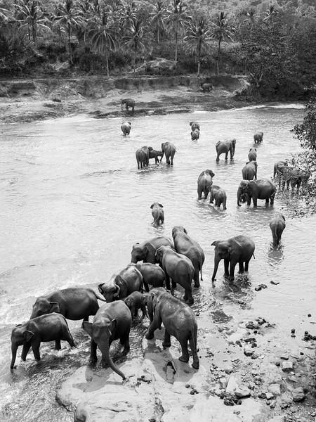 The Elephant Orphanage