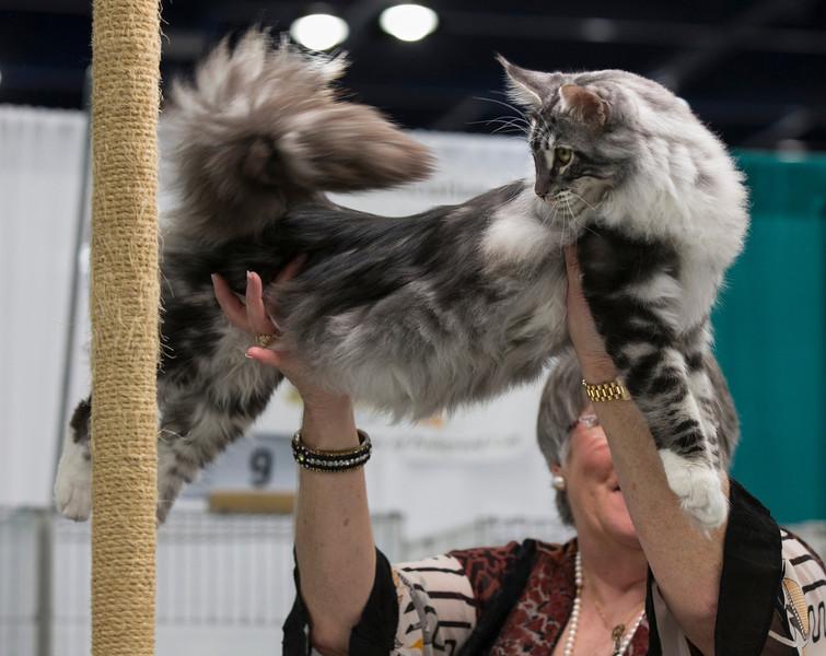 CatShow2014199.jpg