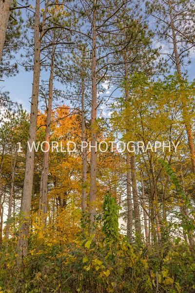Morton Arboretum Fall 2017-92-2-1.jpg