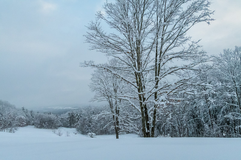 November 2018 Snowfall-_5009234.jpg