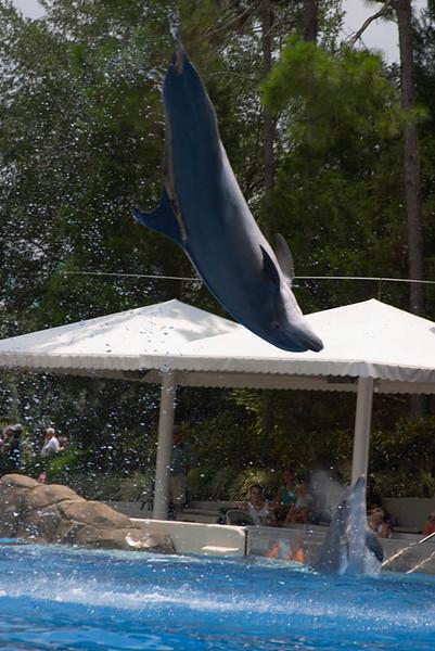 SeaWorld-008.jpg