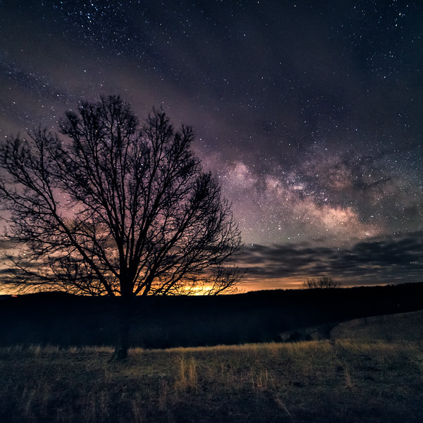 A tree stands alone in a field under the stars
