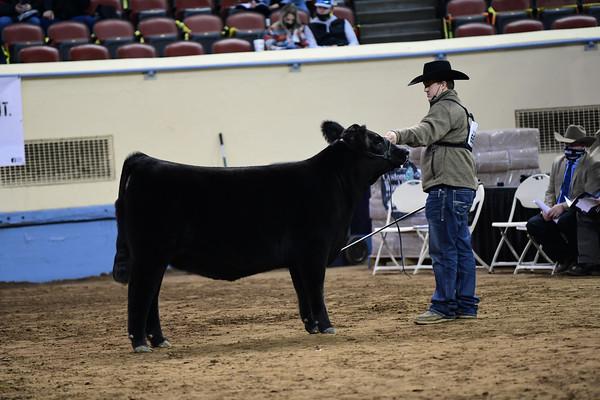 Early Senior Heifer Calf