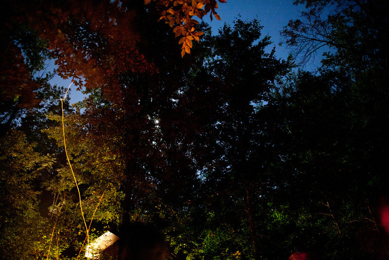 An... 11:05pm view of the sky and forest canopy.