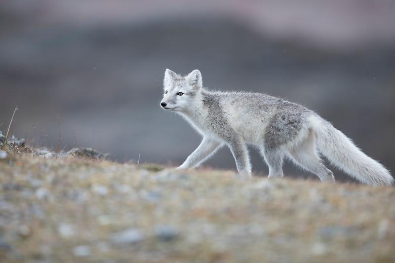 1576_SvalbardTimoT.jpg