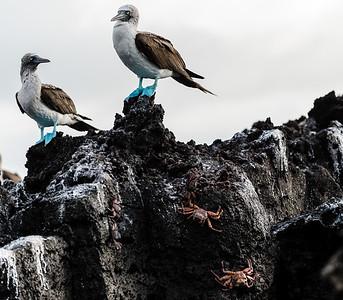 Gallapagos 2016