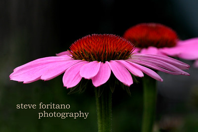 Steve Foritano Photography