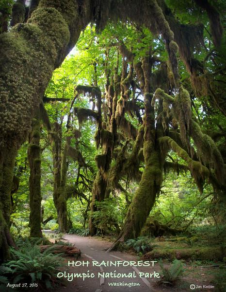 8.27.15 Hoh Rainforest 1 S .jpg