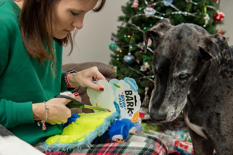 Doggy Christmas0013.jpg