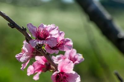Nature in Spring Um-El-Phaen and Regavim