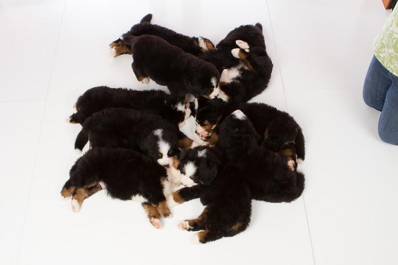 2013-Pearson Pups-Jun02-0515.jpg