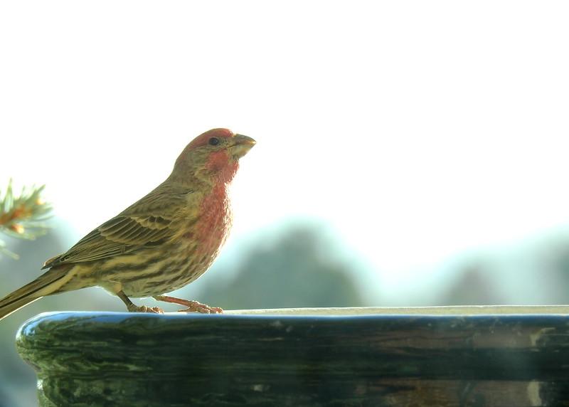 birds (118).JPG