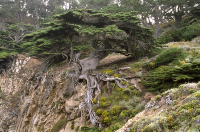 Bay Area scenery