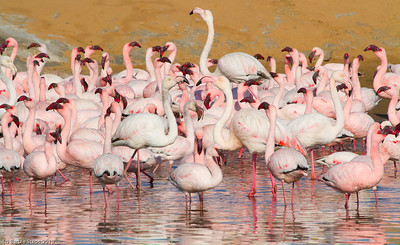 Animals and Birds of Namibia