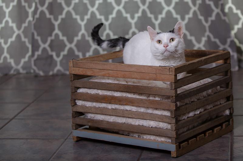 Polzin Cats-5.jpg