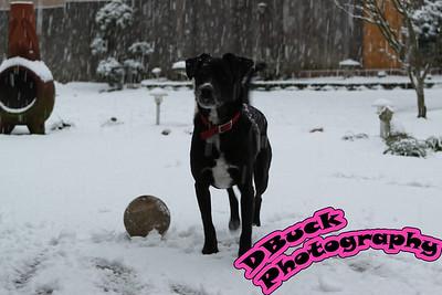 12-29-09 Snow