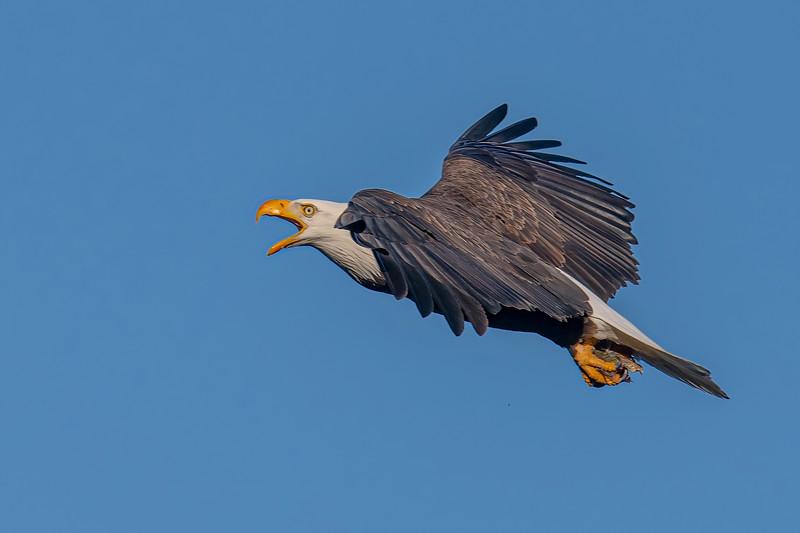 20200126Home Eagles 1-26-20DSC_2601-2.jpeg