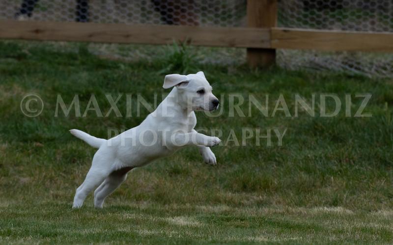 Weika Puppies 24 March 2019-6744.jpg