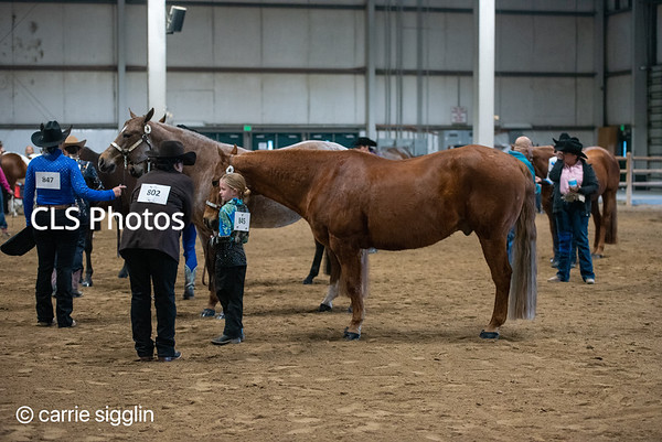 2021 horse shows