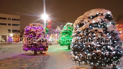 Red Deer Christmas Lights
