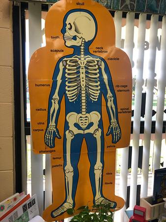Week 10: My body & skeletal system