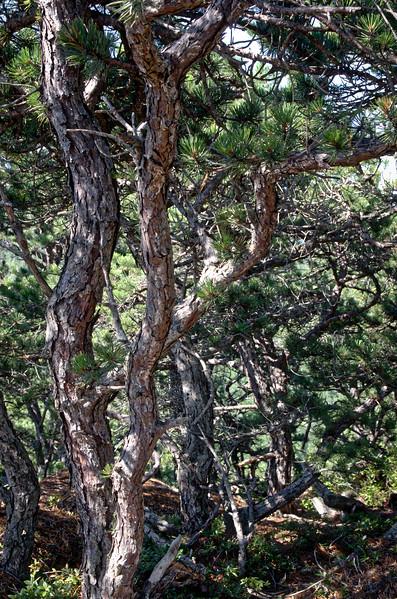 Acadia Nat'l Park-Terry's - July 2017-443.jpg