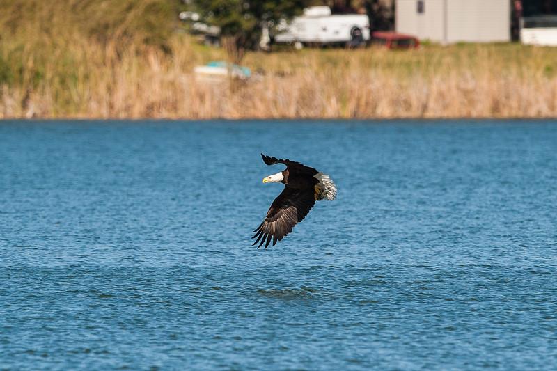LJ Bald Eagle (5 of 7).jpg